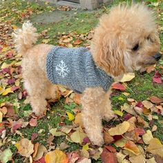 Knitting, Crochet, Dogs, Animals, Pets, Animales, Tricot, Animaux, Breien