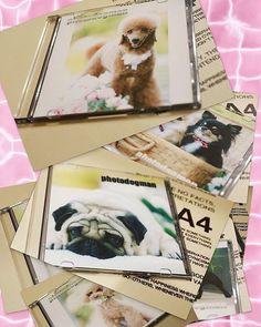 * * * DOG HOUSE DOROP さんへ 撮影データお渡し出来きてます(*^^*)💕👍 ごゆっくりご覧くださいね(*´∀`)💕👏👏 ありがとうございました🎵 * * * * #愛犬 #癒し犬 #犬写真 #モデル犬 #犬バカ部 #ふわもこ部 #トイプードル #わんこカメラ部 #ティーカッププードル #ワンコなしでは生きて行けません会 #west_dog_japan #all_dog_japan #bestanimalpics #bestfriends_dogs #bestwoof #excellent_Dogs #FurrendsUpClose #fever_pets  #total_dogs #moon_bestanimals #7pets_1day #picsofdogmodels #picsofallanimals #brightpets #Great_Captures_Dogs #igworldclub_pets #9Vaga_CatsDogs9 #pets_of_our_world #special_alive_ #ig_eurasia
