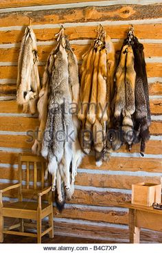 Badger, Wolf, Red Fox, Silver Fox, and Cross Fox pelts in the Master's House at the Last Mountain House Provincial - Stock Image