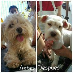 Otro cachorrito que pasó por www.mascotasalamoda.cl