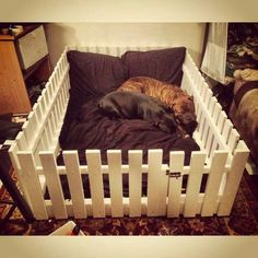Fence doggie bed for puppies only and it better be tall enough!
