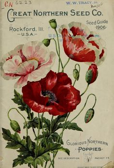"""tattoo idea """"Glorious Northern Poppies"""" - The Great Northern Seed Company Seed Guide Flower Drawing, vintage printable Vintage Labels, Vintage Ephemera, Vintage Cards, Vintage Postcards, Garden Catalogs, Seed Catalogs, Vintage Blume Tattoo, Etiquette Vintage, Vintage Seed Packets"""