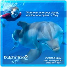 Who's watching on Blu-ray™ this weekend? Dolphin Quotes, Dolphin Images, Dolphin Tale 2, Sea Dolphin, Orcas, Clearwater Marine Aquarium, Disney Movie Quotes, Keep Calm Quotes, Cross Stitch Kits