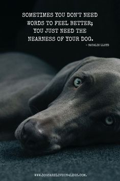 Sometimes you don't need words to feel better, you just need the nearness of your dog. #dogsayings #dogquotes