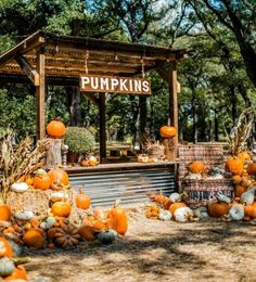 Pumpkin Patch Farm, Pumpkin Patch Birthday, Harvest Farm, Fall Harvest, Planting Pumpkins, Vegetable Stand, Pumpkin Display, Farm Stand, Christmas Tree Farm