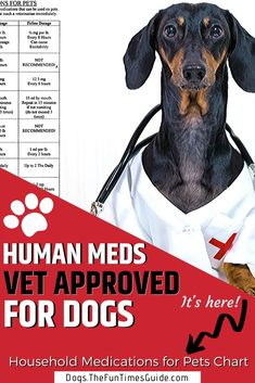 A list of acceptable household medications for pets, according to veterinarians. Plus the correct doses for dogs & cats. Before giving your dog medications from your medicine cabinet, be sure to check this list of human medicine safe for dogs first! Medicine Safe For Dogs, Cat Medicine, Animal Medicine, Medicine Cabinet, Meds For Dogs, Medication For Dogs, Dog Meds, Safe Medications For Dogs, Dog Health Tips