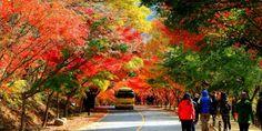 Du lịch Vườn Quốc gia ở Hàn Quốc (Phần III) | Thông tin Hàn Quốc