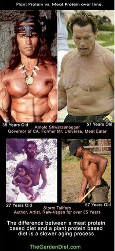 The difference between a meat protein based diet and a plant protein based diet is a slower aging process.