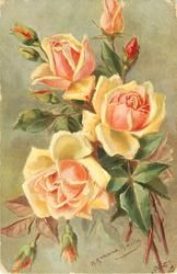 three orange-yellow roses facing up with seven buds around