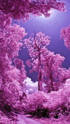 purple road forest nature landscape landscapes fantasy through amazing source trees japanese pink blossom light visit shadows pond