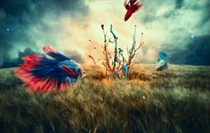 """Check out my @Behance project: """"The gathering of bettas"""" https://www.behance.net/gallery/44740667/The-gathering-of-bettas"""