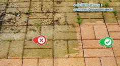 2 Astuces Pour Enlever la Mousse sur la Terrasse (Révélées Par un Jardinier). Mousse, Outdoor Landscaping, Diy Cleaning Products, Horticulture, Palmiers, Deco, Sweet, Gardening, Landscape