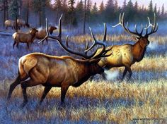Artist Cynthie Fisher Unframed Elk Print Winner Takes All | WildlifePrints.com