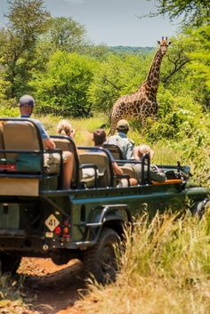 Safari is addictive! Like if you agree! Find your favourite safari vacation here: Mountain Gorilla, Private Games, Close Encounters, Women's Sports Bras, What To Pack, Walking In Nature, Tent Camping, Traveling By Yourself, Safari