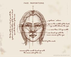 REAL Face Proportions by Ametystical on DeviantArt