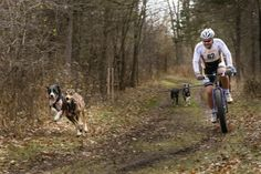 Bikejoring_race.jpg Many types of dogs can be used in bikejoring. Often they are some type of hound mixes.