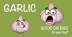 garlic good or evil