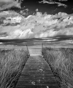 Martha's Vineyard Photography Limited Edition Print Black and White Beach Photo Oak Bluffs Beach Boardwalk Path Dunes Grass Wall Art Decor