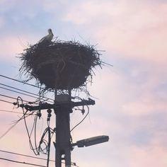 Stork in Hungary