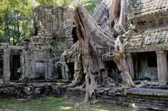 Tree roots, Tetrameles tree (Tetrameles nudiflora), its air roots covering part of the Ta Prohm temple in the archaeological temple complex of Angkor, Siem Reap, Cambodia, Southeast Asia Photografie: Tree roots, Tetrameles tree (Tetrameles nudiflora),...