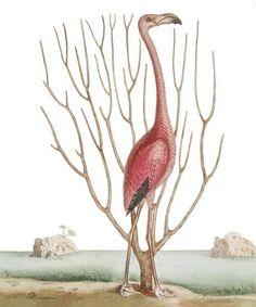 Flamingo - Natural History Museum greeting card