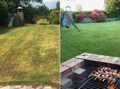 Yard Care, Grass Seed, Pampas Grass, Lawn Mower, Compost, Wild Flowers, Seeds, Braids, Gardening