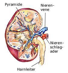 Niere