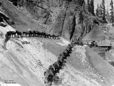 A pack mule train approaches the Nellie Mine in San Miguel County, Colorado. 1934/1941. Creator(s) Walker Art Studio. Courtesy: Western History/Genealogy Department, Denver Public Library, Denver, Colorado (USA).