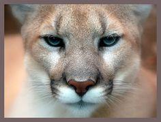 ¿Cuál es el hábitat natural del puma