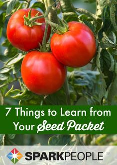 7 Things Your Seed Packet Can Tell You. Really helpful for beginning gardeners! | via @SparkPeople #gardening #health #nutrition #eatbetter