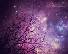 Nature Photography, Starry Night Sky, Surreal, Forest, Purple, Trees, Fine Art, Large Wall Art, Abst