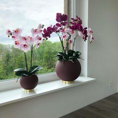 Foto Galerie - von flowerwerK Vase, Plants, Home Decor, Photos, Decoration Home, Room Decor, Planters, Jars, Vases