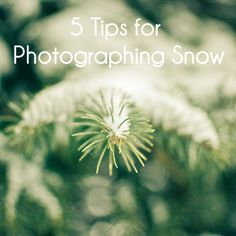5 tips for photographing snow #photography #365project