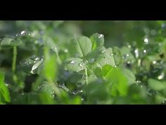 We love this! Get excited for St. Patrick's Day with beautiful shots of Ireland and the entire world going green. How could you not love Liam Neeson's voice as well?