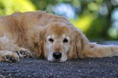 dog | by Danny VB