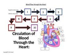 Anatomy of the knee quizworksheet pinterest anatomy worksheets flow of blood through the heart quiz or worksheet ccuart Gallery