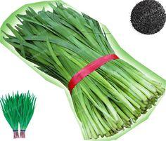 NON GMO GARLIC CHIVES Allium Tuberosum 350 SEEDS