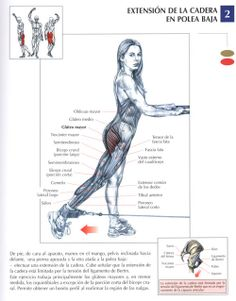 Extencion de cadera en maquina | Hip extention machine - http://fitnessallya.com/extencion-de-cadera-en-maquina-hip-extention-machine/