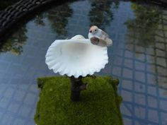 Miniature Fairy Garden Shell Birdbath with by TheLittleHedgerow, $7.50