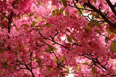 Pretty in pink near Idaho Falls | Flickr - Photo Sharing!