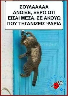 Funny Greek Quotes, Funny Quotes, Cat Memes, Cute Animals, Jokes, Lol, Cats, Tejidos, Humor