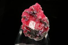 This specimen consists of a striking cluster of sharp, lustrous, richly colored rhombs of rhodochrosite aesthetically accented by purple fluorite crystals and sparkling, lightly colored crystals of fluorapatite! Minerals And Gemstones, Crystals Minerals, Rocks And Minerals, Stones And Crystals, We Will Rock You, Rocks And Gems, Sweet Home, Colorado, Fossils