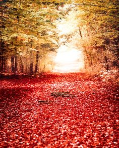 Nature wall decor Red leaves gold woodland  tunnel by Raceytay, $30.00