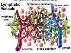 lymphedema vs edema
