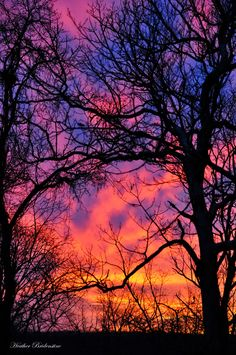 "✮"" Pink sky at night, shepherds delight""  I've always loved tree silhouettes since a teacher at junior school showed us how to colour wash a page then paint black branches on top."