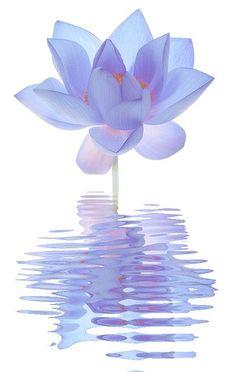 Blue Lotus Flower Reflections / blue / color / blue Flower / flower / - IMG_7729 by Bahman Farzad, via Flickr