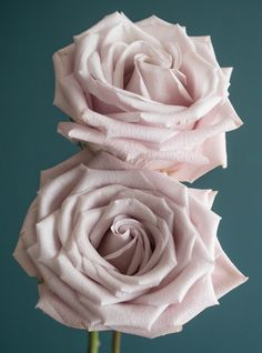 Popular Champagne Rose Varieties: Quicksand, Sahara, Early Grey, Sahara Sensation, and Menta Winter Wedding Flowers, Rose Wedding, Floral Wedding, Wedding Dreams, Bridal Bouquet Fall, Blush Bouquet, Wedding Bouquets, Early Grey, Mint