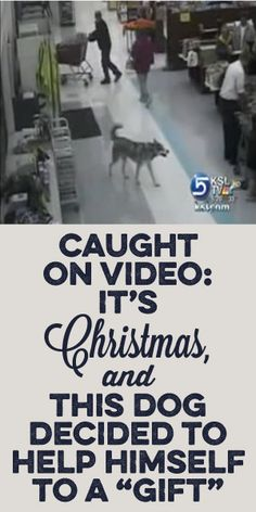 Caught On Video! It's Christmas And This Dog Decided To Help Himself To A Gift!