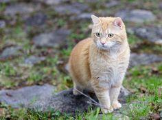 Tytti by Tytti Kitty on Flickr.