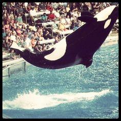 Get splashed by Shamu - Completed Summer 2013
